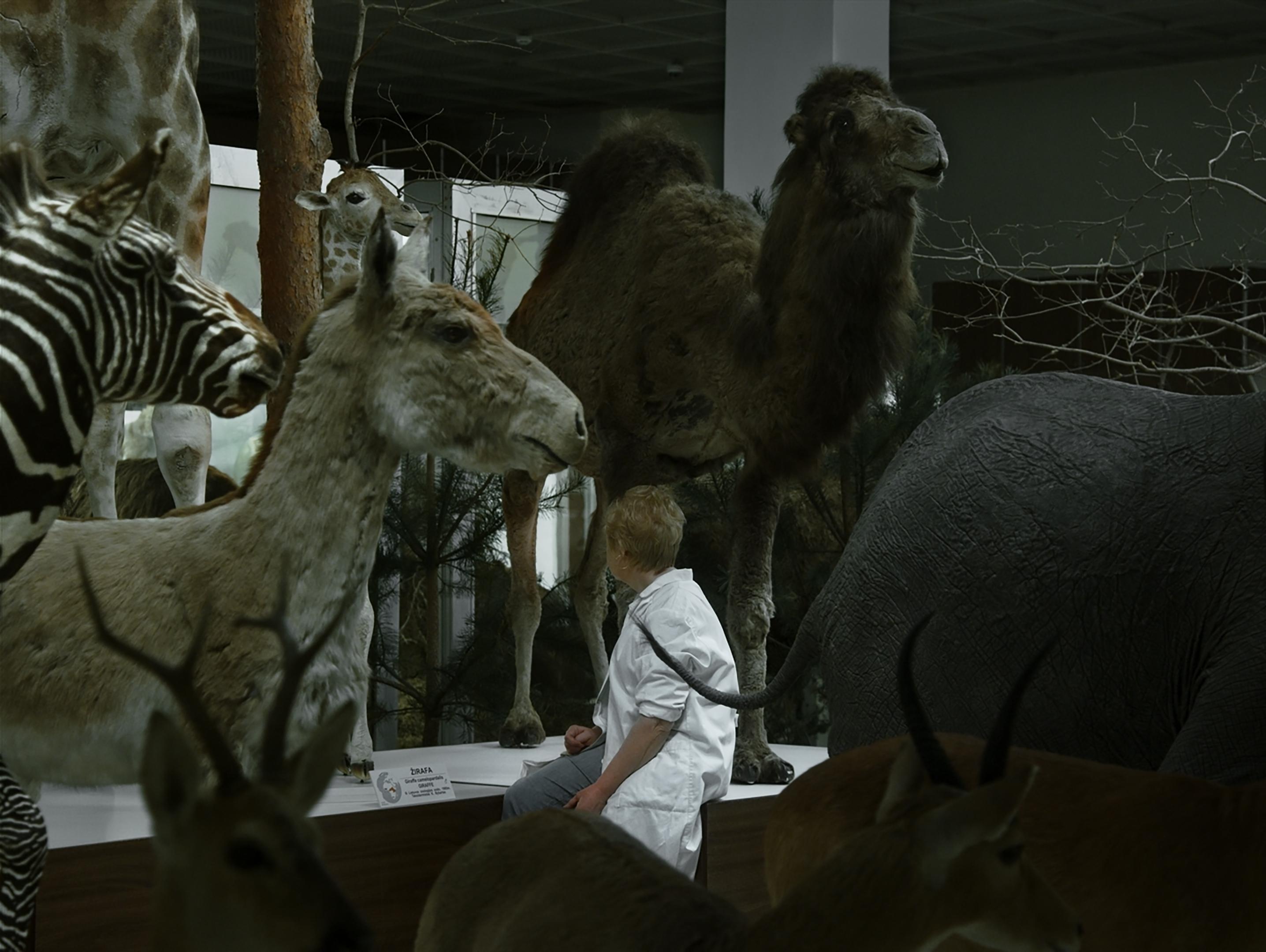 Animus Animalis. Lugu inimestest, loomadest ja asjadest / Animus Animalis. A Story about People