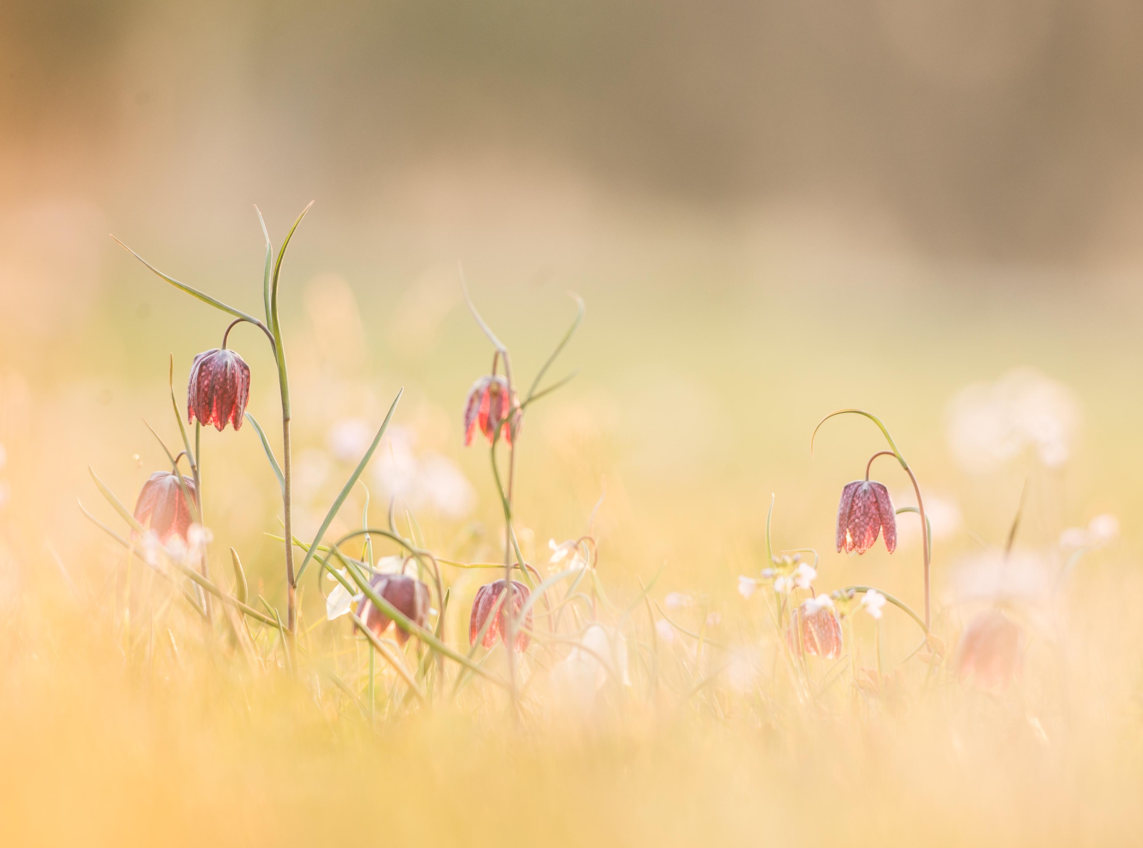 Niidud - kaotatud paradiis / The Meadow - Paradise Lost